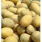 供应陕西大棚哈密瓜销售价格哈密瓜基地上市价格图片