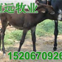 供应江西上饶肉驴养殖场萍乡小驴出售价格批发