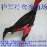 供应云南省纯种斗鸡专卖