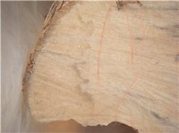 供应黄杨木原木批发,黄杨木原木批发价格,黄杨木原木厂家批发