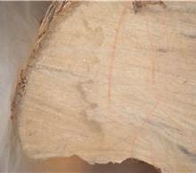 供应于工艺品/木雕的黄杨木/优质大径黄杨木/优质黄杨木大量批发