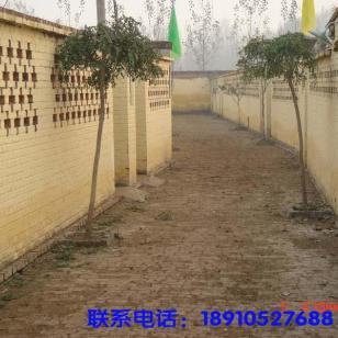 陕西咸阳市梅花鹿养殖成本图片