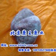 2012年梅花鹿茸鞭胎膏图片