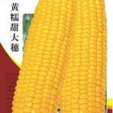 旱地玉米化肥一次性底施技术措施
