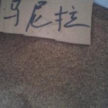 供应秒杀之四季长青草坪种子庭院专用草种《马尼拉种子》20元/一斤批发