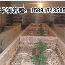 供应山东蜈蚣中国动物药材蜈蚣养殖技术