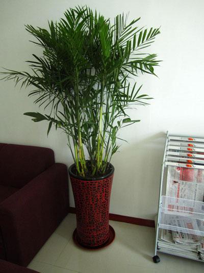 北京 青岛/上一条:竹子 下一条:竹子