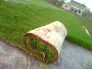 供应高羊茅草皮卷