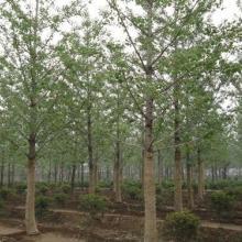 供应绿化工程