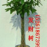 供应南京花卉租赁