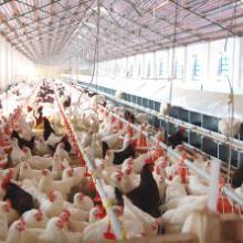 供应养殖业专项规划