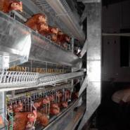 层叠式自动化养鸡设备图片
