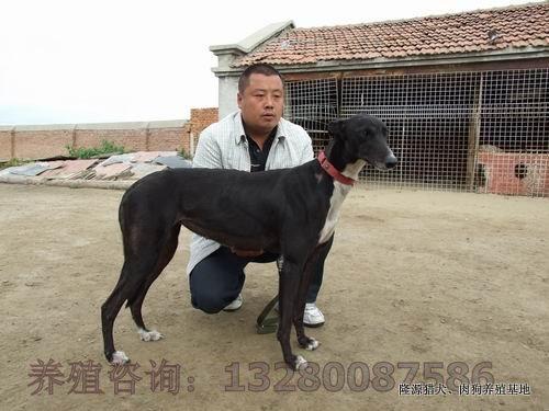 肉狗养殖场图片/肉狗养殖场样板图 (2)