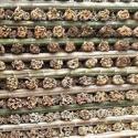 吉林种参竹片图片