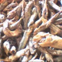 供应饲料鱼干小干鱼小鱼条