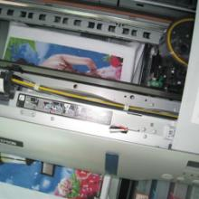 供应 商标印刷机平板纸箱平板印刷机