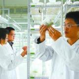 金线莲培养瓶生产加工经销商批发商