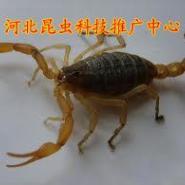 石家庄蝎子养殖清理蝎场的消毒用品图片