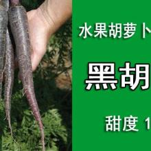 供应黑胡萝卜提取物可能会替代胭脂虫红色素/提取色素的黑胡萝卜种子图片