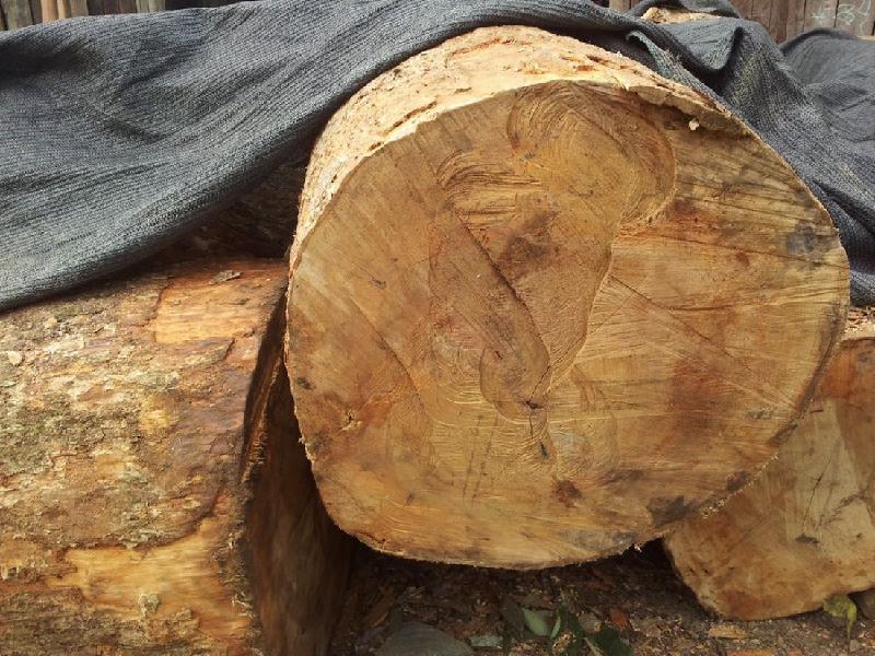 供应广西柳州40以上的金丝楠木价格