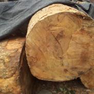 广西柳州40以上的金丝楠木价格图片