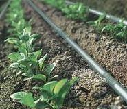 山西蔬菜大棚PE管滴灌管的连接图片