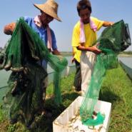 安徽泥鳅养殖场的致富之路图片