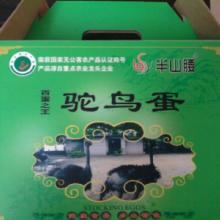 供应广州农副产品鸵鸟蛋