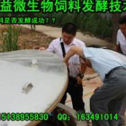 广东广西发酵木薯渣做生物饲料技术图片