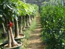 供应浦东植物租赁,办公室植物发财树价格,办公室风水植物摆放知识