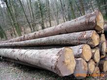 供应非洲木材进口清关代理图片