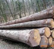 非洲木材进口清关代理