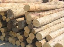 供应非洲崖豆木进口清关代理图片