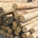 东非木材进口清关报价