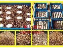 供应三宝孵化龟鳖蛭石13930104417