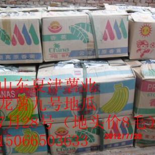 山东济薯12地瓜价格图片