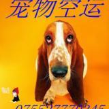 供应深圳宠物空运到南京-宠物空运价格