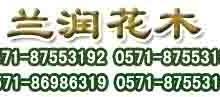 字其他园林植物-杭州室内绿植租摆办公室植物批发