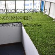 重庆低价人造草坪图片