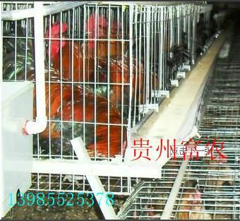 供应贵州开阳土鸡,贵州土鸡养殖,贵州土鸡批发,