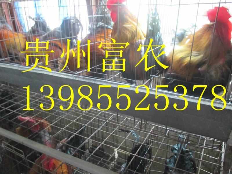 贵州/上一条:土鸡养殖基地下一条:土鸡养殖前景