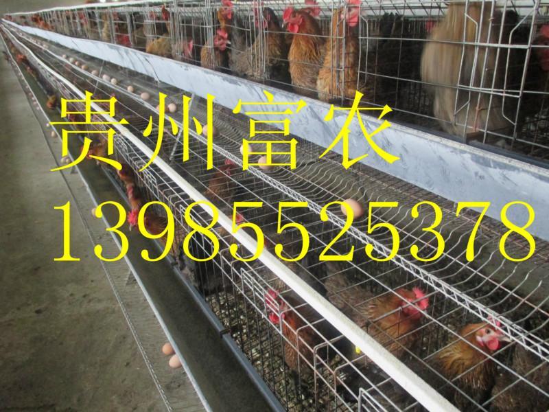 云南省沾益土鸡养殖,沾益土鸡苗养殖场,沾益土鸡批发市场,