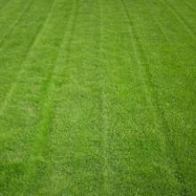 供应批发四川成都绿化草种花种灌木种子中华结缕草草籽