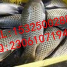供应钓鱼诱鱼剂强效引鱼上钩用DMPTCC-DMPT02图片
