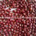 大量东北北朝鲜红小豆产品毛货成品图片