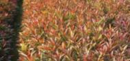 广州龙洞明兴绿化造林种苗场