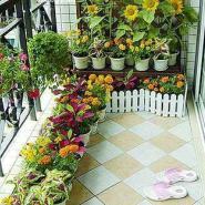 上海哪里的阳台绿化最便宜图片