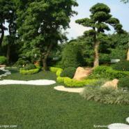 上海宝山区别墅绿化多少钱图片