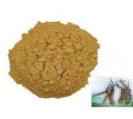 发酵虫草菌粉图片/发酵虫草菌粉样板图 (2)