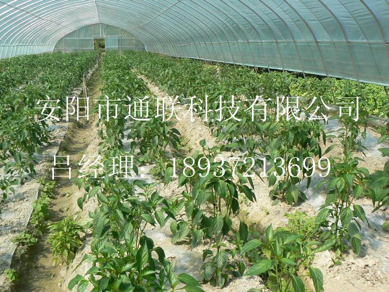 供应蔬菜大棚图片